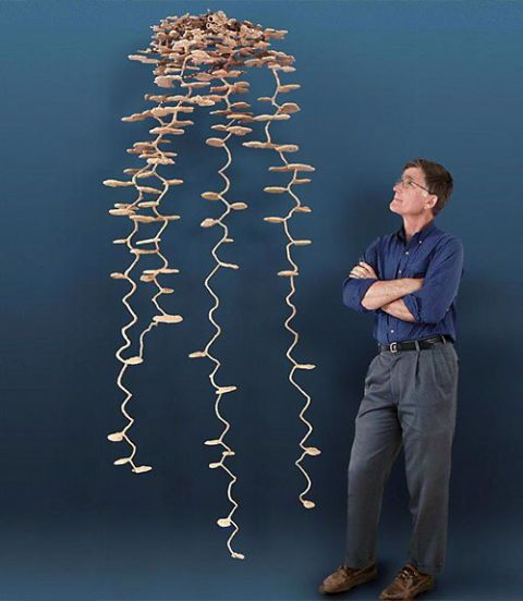 Walter Tschinkel with an Ant Colony