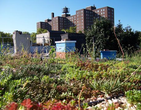 rooftop beekeeping in brooklyn