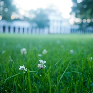 Quick Tips to Revive Your Lawn for Spring