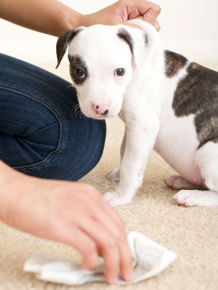 How To Clean Carpet 10 Carpet Cleaning Secrets From The Pros