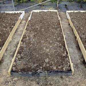 5 Tips for Raised Bed Gardens