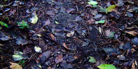 Manage the Mulch