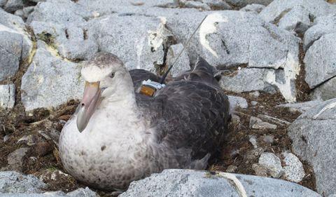 Organism, Beak, Bird, Rock, Adaptation, Feather, Terrestrial animal, Morning, Seabird, Water bird,