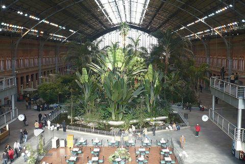 Beam, Urban design, Daylighting, Botanical garden, Palm tree, Stairs, Courtyard, Balcony,
