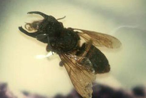 Invertebrate, Insect, Arthropod, Pest, Pollinator, Wing, Bee, Membrane-winged insect, Net-winged insects, Fly,