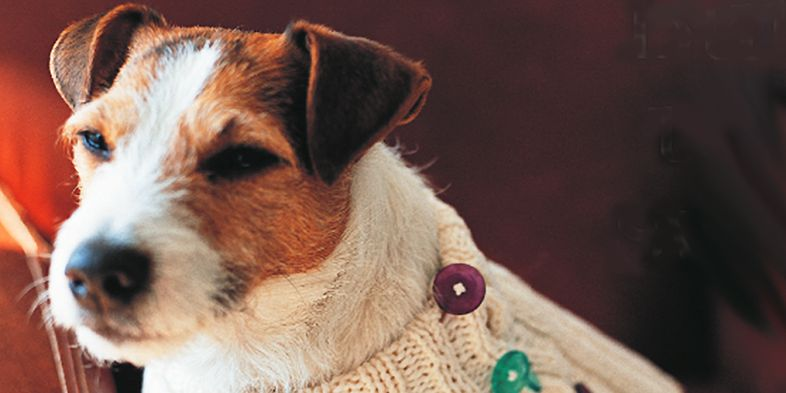 Dog jumper to knit