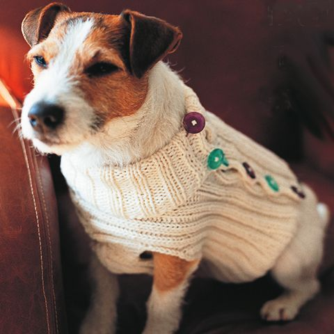 DIY gifts:Dog jumper to knit