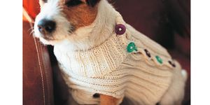 Dog jumper to knit