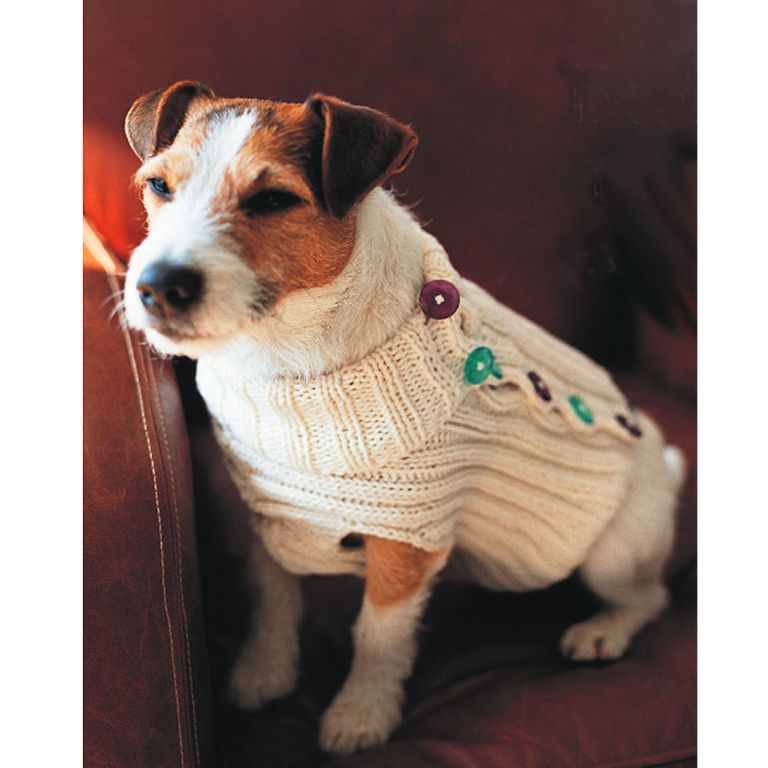 Keep Your Pet Cosy In A Buttoned Dog Jumper