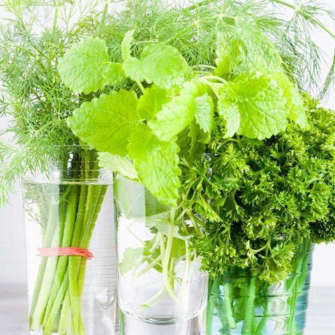 Fresh herbs in glasses