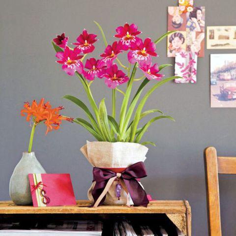 Gift wrap plant pot