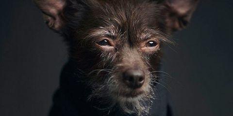 Vincent Lagrange dog portrait