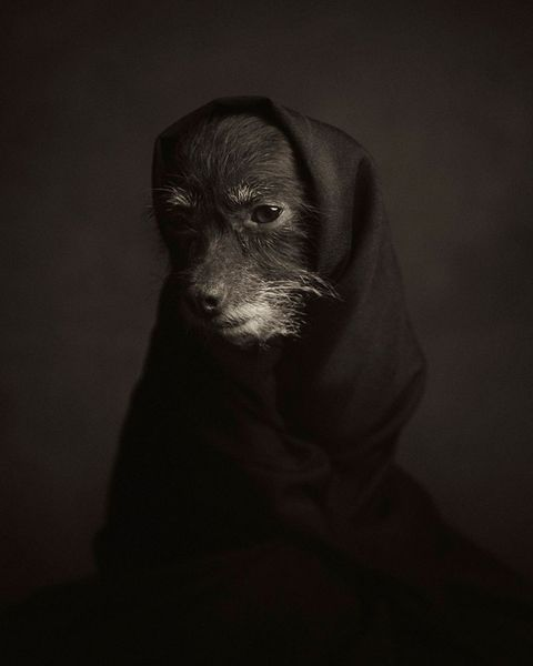 Dog-portrait-2