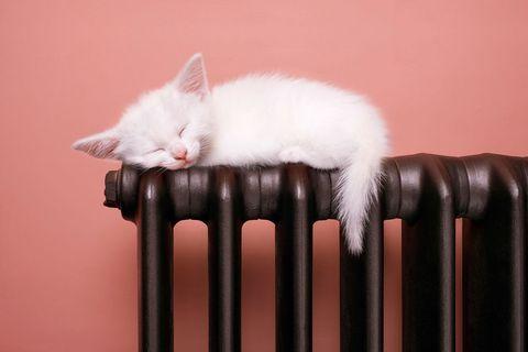 Kitten resting on top of raidator