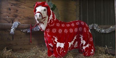 Shetland pony Christmas onesie
