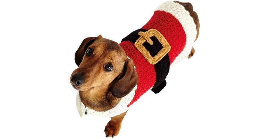 How To Make A Dog Christmas Outfit: Canine Santa Outfit Free ...