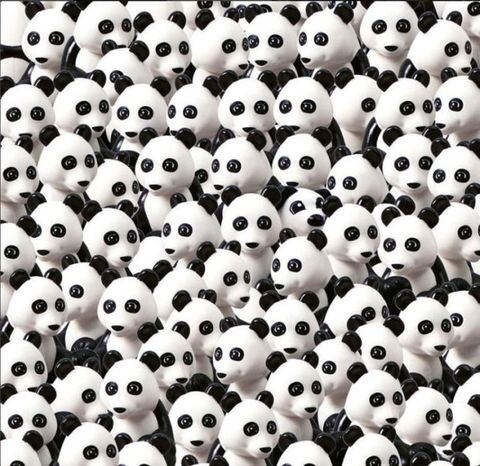 Dog in pandas puzzle