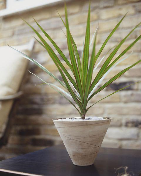 Flowerpot, Leaf, Terrestrial plant, Houseplant, Hardwood, Plywood, Plant stem, Still life photography, Vase, Perennial plant,
