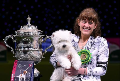 Crufts winning dog Westie