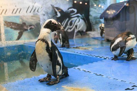 Penguins Japanese restaurant