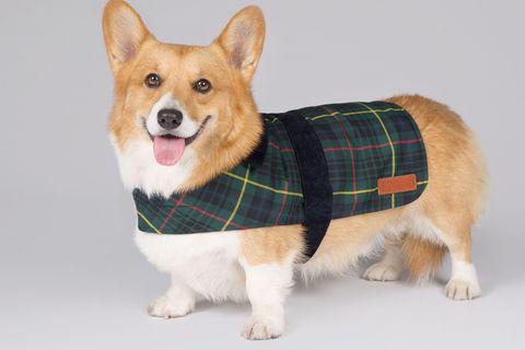 corgi royal tartan coat