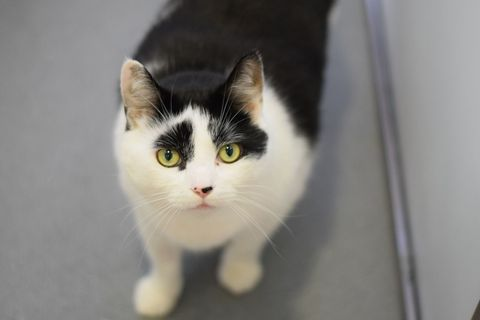 National cat day adopt Gato