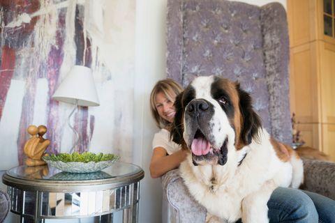 Dog breed, Vertebrate, Mammal, Dog, Carnivore, Moscow watchdog, St. bernard, Sporting Group, Fur, Lampshade,