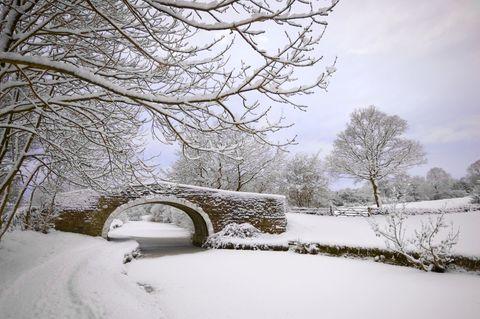 Winter, Branch, Freezing, Twig, Tree, Snow, Frost, Precipitation, Winter storm, Bridge,
