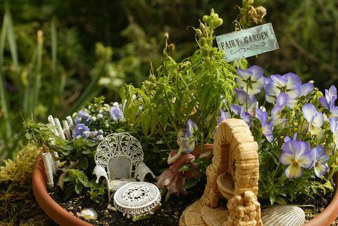 Flower, Flowerpot, Petal, Ingredient, Lavender, Groundcover, Garden, Herb, Annual plant, Spring,
