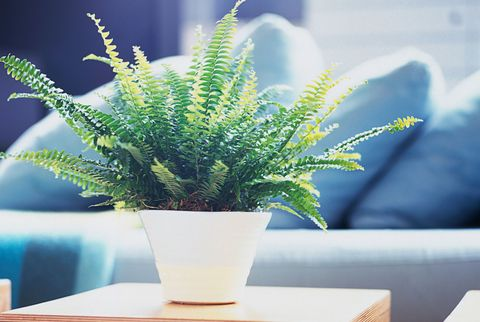Blue, Plant, Table, Flowerpot, Terrestrial plant, Majorelle blue, Botany, Interior design, Annual plant, Vase,