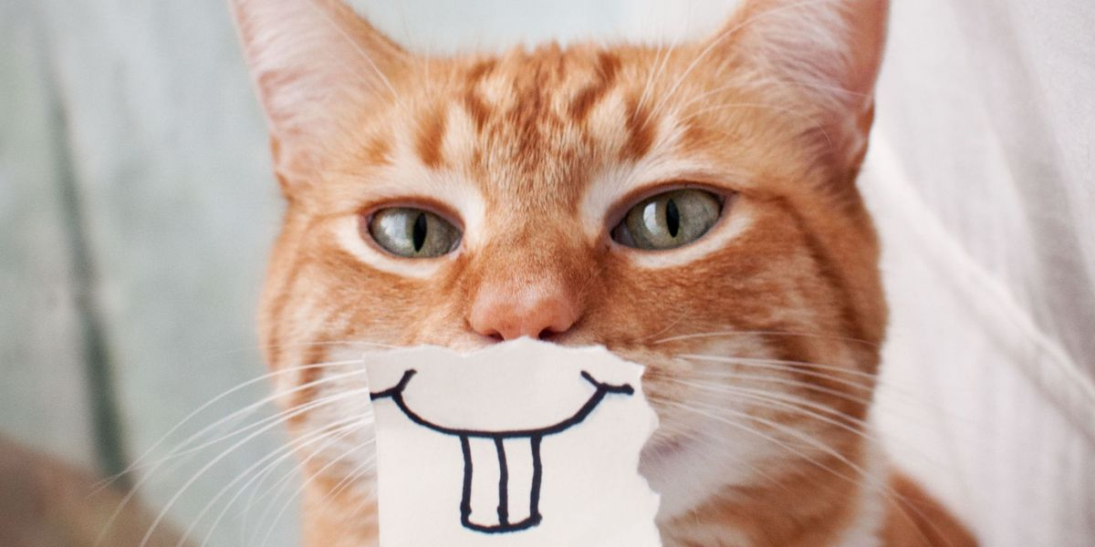 Cats have one of just five personality types, says expert