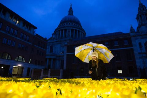 Marie Curie daffodils art installation