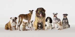 Different breeds of dog in group