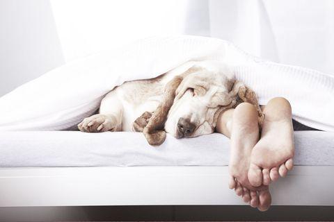 dog bed sleep