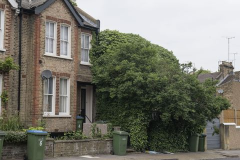 London house covered in trees