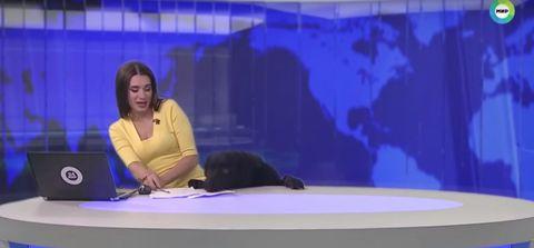 Newsreader with labrador