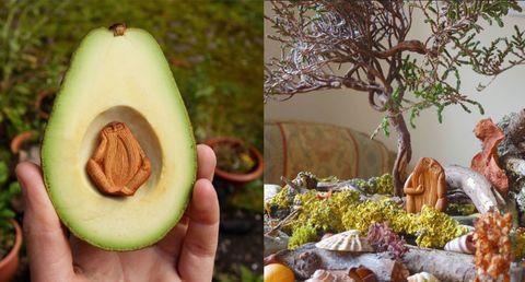 Artist creates mind-blowingly intricate avocado stone art