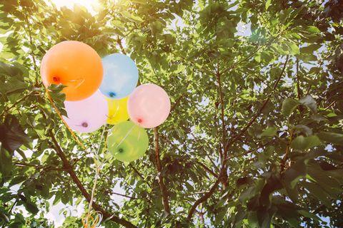 Branch, Balloon, Party supply, Light, Sunlight, Twig, Peach,