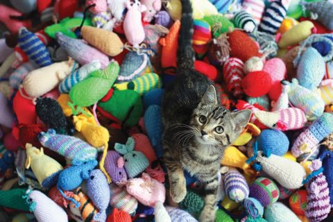 Battersea Dogs and Cats Home - knitting volunteers - kittens
