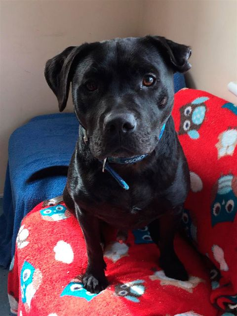 "<p>Two-year-old black staffie Philip has been with Blue Cross for more than 214 days and is desperate to find a forever home.</p><p><span>He loves being out and about on long walks so is looking for a new owner who shares his love of the outdoors. He's a friendly dog who enjoys companionship. He will need to be the only pet in the home and will need time to settle into his new surroundings but will make someone a great companion.<strong data-redactor-tag=""strong"" data-verified=""redactor""></strong></span></p><p><strong data-redactor-tag=""strong"" data-verified=""redactor"">If you can give Philip a home please visit the&nbsp;<a href=""https://urldefense.proofpoint.com/v2/url?u=http-3A__www.bluecross.org.uk&amp;d=DwMGaQ&amp;c=B73tqXN8Ec0ocRmZHMCntw&amp;r=4Fjec5Ynz9pJP25ATDFSNOwqMxMXz2tctQFdFnrLhLY&amp;m=asXoqIZvtLLy8ybg1qZYn-rU-S8u-PoEOQlyMtwvmw8&amp;s=Zt8mzZgQ4r8SLejIN2HhjojNeAGJORp9bAYLK0eLG0M&amp;e="" data-tracking-id=""recirc-text-link"">Blue Cross</a><span class=""redactor-invisible-space""></span>.</strong></p>"
