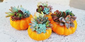 pumpkin terrariums