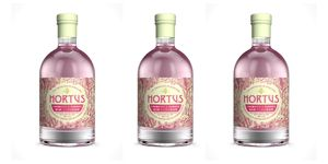 Hortus rhubarb and ginger gin Lidl