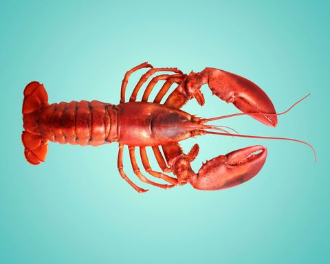 lobster; how to prepare a lobster