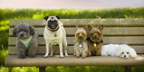 Different dogs on bench