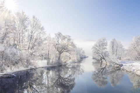 Snow on lake and trees