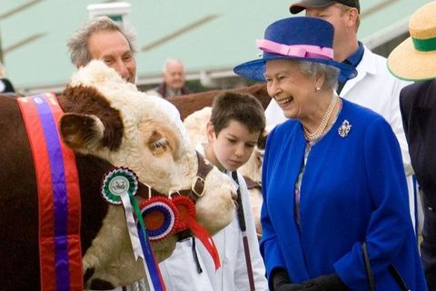 <p>The Queen at the Great Yorkshire Show with the prize-winning bull.</p>