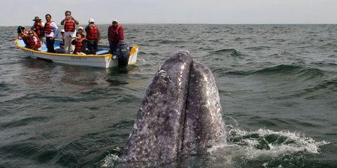 Whale kills woman