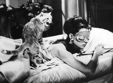 Cat and woman in bed