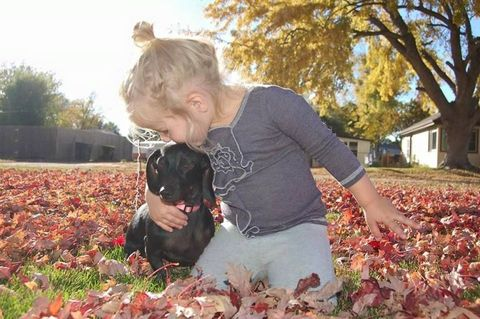 Human, Leaf, Deciduous, Dog breed, Mammal, Carnivore, Dog, People in nature, Autumn, Sunlight,