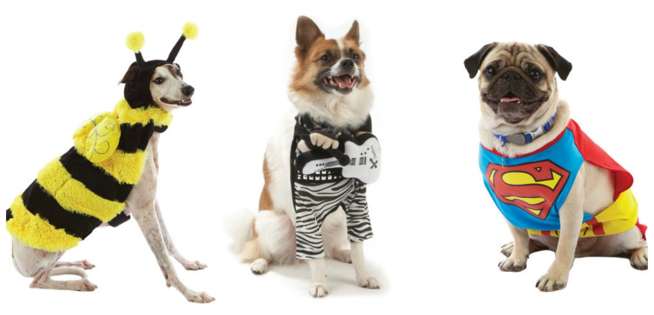 14 Pups Who Totally Owned Their Halloween Costumes